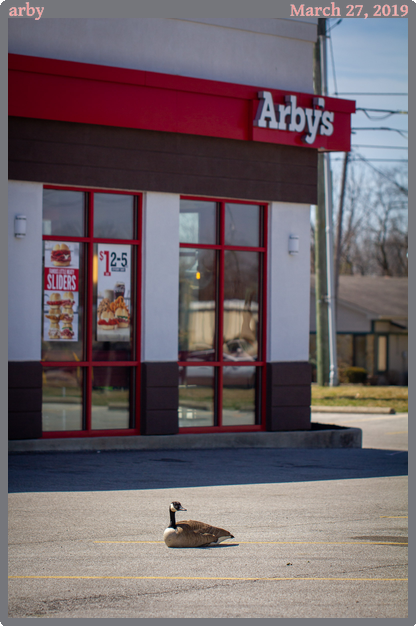 arby, taken 2019-03-27 || Canon Canon EOS REBEL T2i | 100mm | 1/2000s @ f/2.8